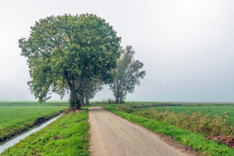 Сельский ландшафт в голландском польдере с строкой высокорослого дерева вербы стоковое изображение rf