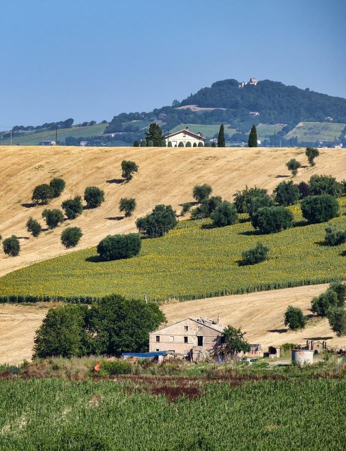 Сельский ландшафт около Recanati Италии стоковые изображения rf