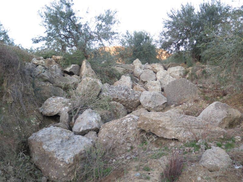 Сельский rockery в оливковой роще стоковое фото rf