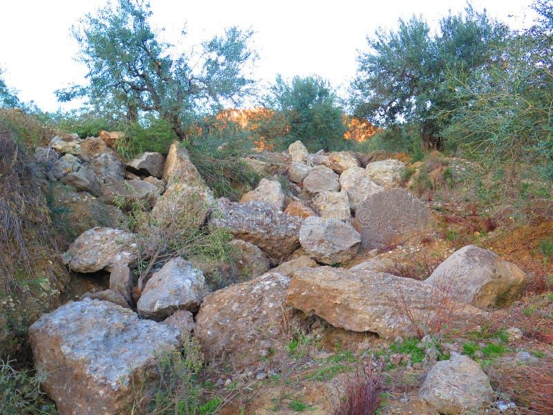 Сельский rockery в оливковой роще стоковое изображение rf