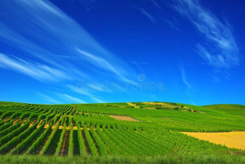 сельское ландшафта рисуночное стоковые фотографии rf