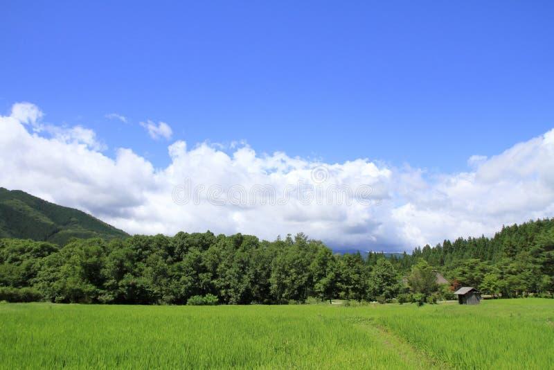 Сельское лето сцены стоковые изображения rf