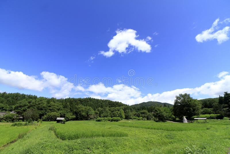 Сельское лето сцены стоковая фотография