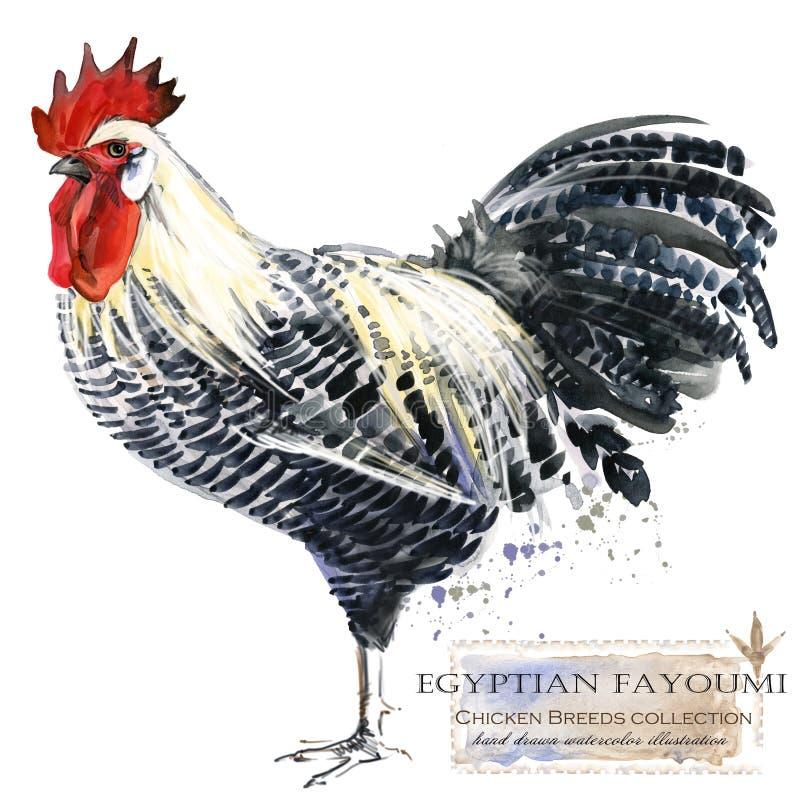 Сельское хозяйство птицы Цыпленок разводит серию отечественная птица фермы бесплатная иллюстрация