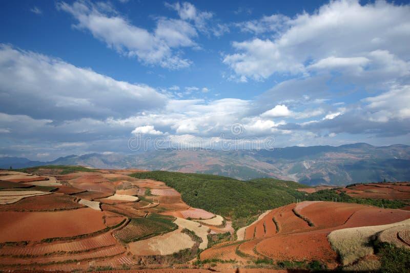 сельскохозяйственне угодье фарфора цветастое dongchuan стоковое изображение rf