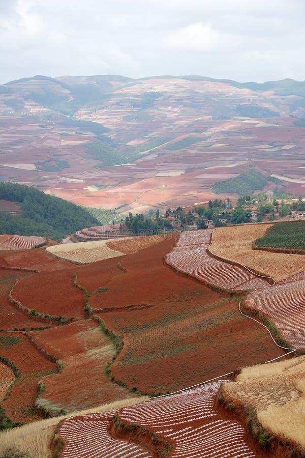сельскохозяйственне угодье фарфора цветастое dongchuan стоковое фото