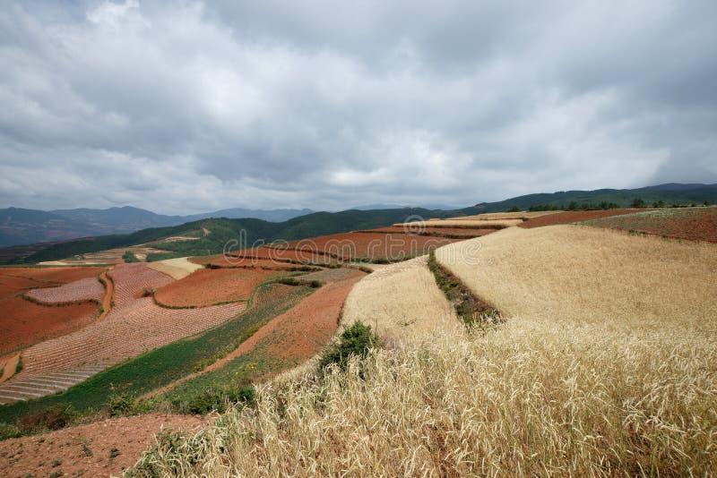 сельскохозяйственне угодье фарфора цветастое dongchuan стоковая фотография