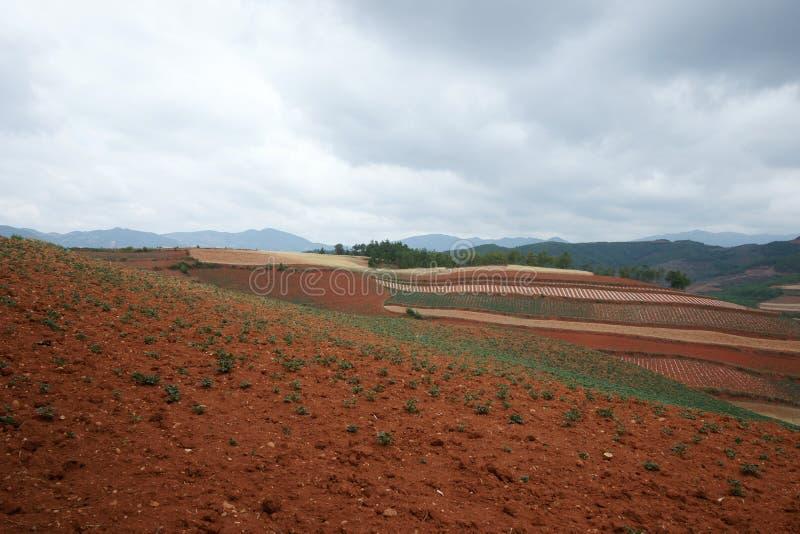 сельскохозяйственне угодье фарфора цветастое dongchuan стоковые фото