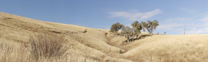 сельскохозяйственное угодье сухой травянистой засухи пораженное стоковая фотография rf