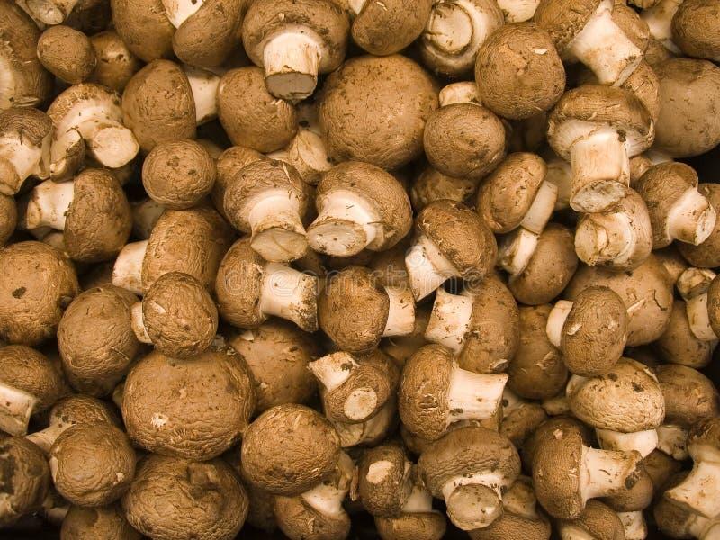 сельскохозяйственные продукты VII стоковые фотографии rf