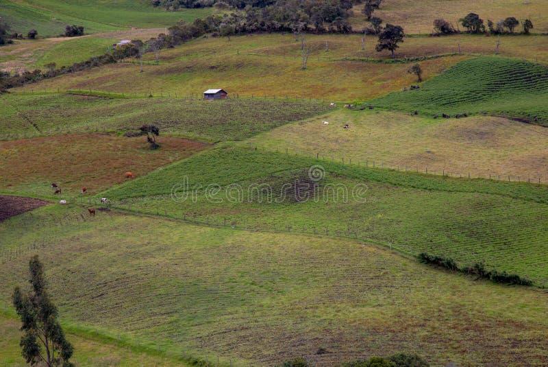 Сельскохозяйственные угодья в различных этапах урожаев и дома стоковые изображения rf