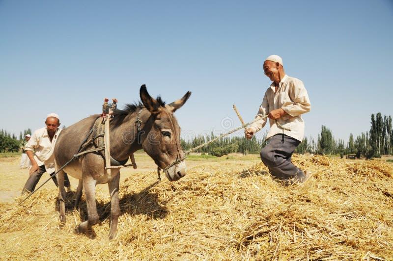 Селянин Uygur стоковое фото