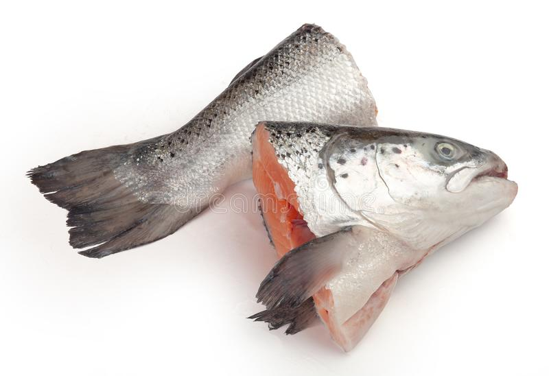 Семги для супа рыб стоковые изображения rf