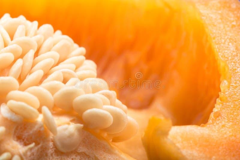 Семена болгарского перца стоковая фотография
