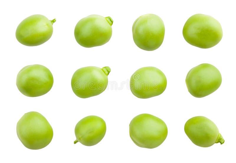 Семена горохов стоковые фото