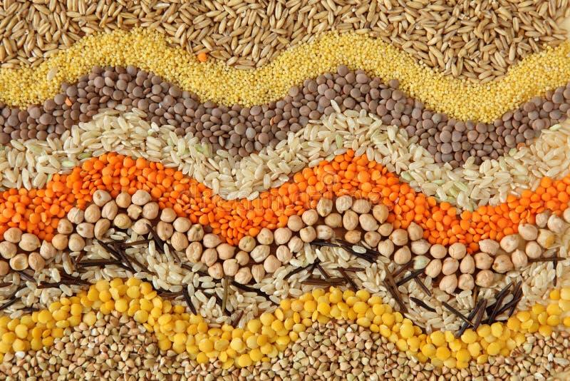 семена зерен различные стоковое изображение rf