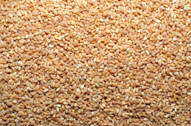 Семена зерна пшеницы стоковое изображение rf