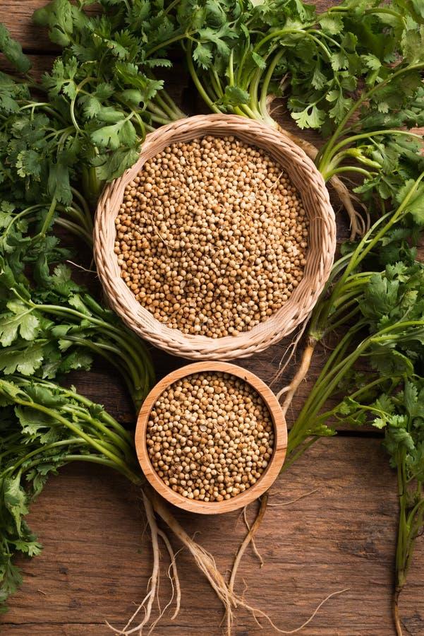 Семена и листья кориандра на деревянной предпосылке стоковая фотография