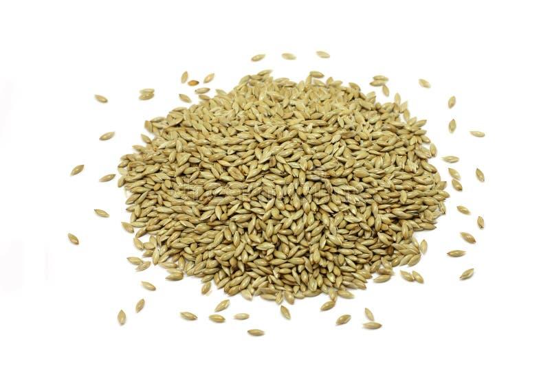 Семена канереечной травы пригорошни стоковые изображения rf