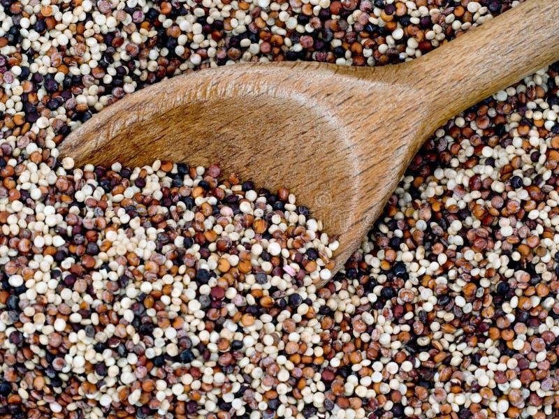 Семена квиноа радуги с деревянной ложкой, крупным планом стоковое фото rf