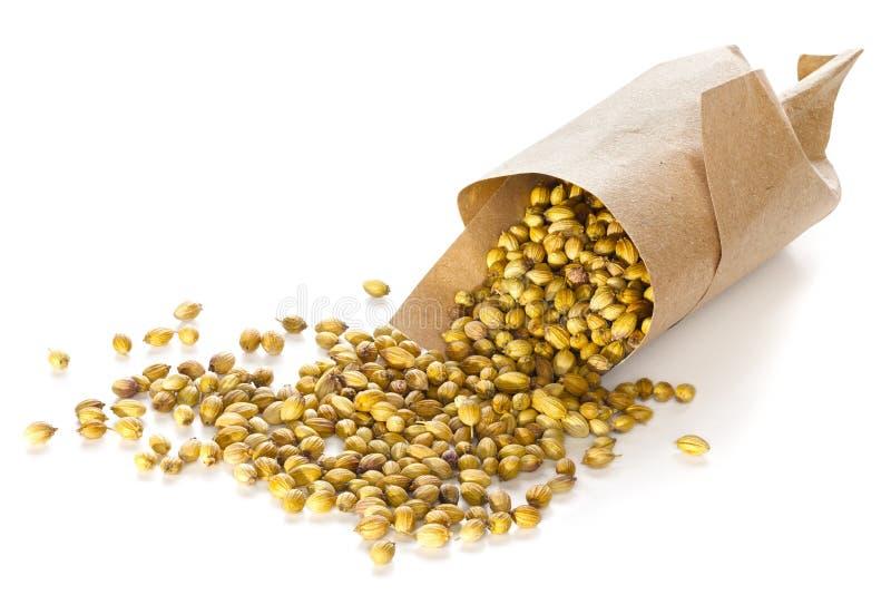 Семена кориандра стоковая фотография