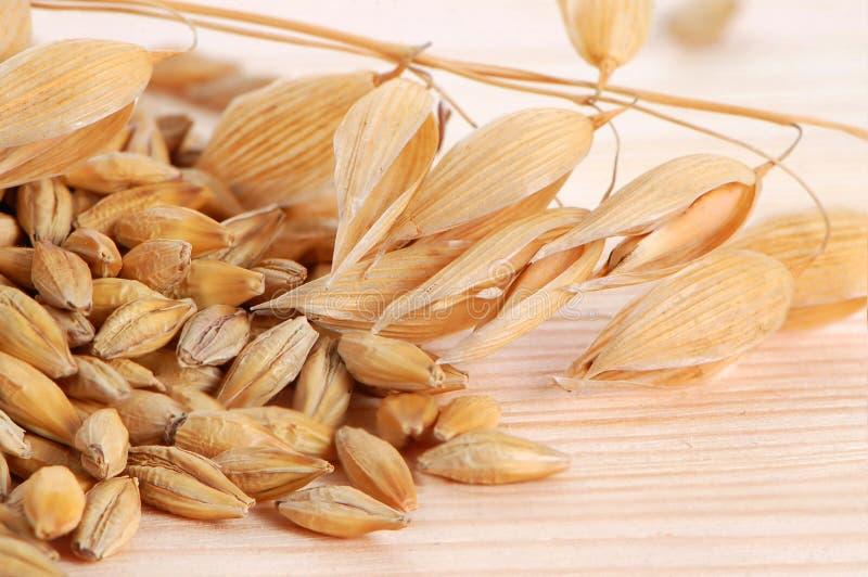 семена овса стоковое изображение