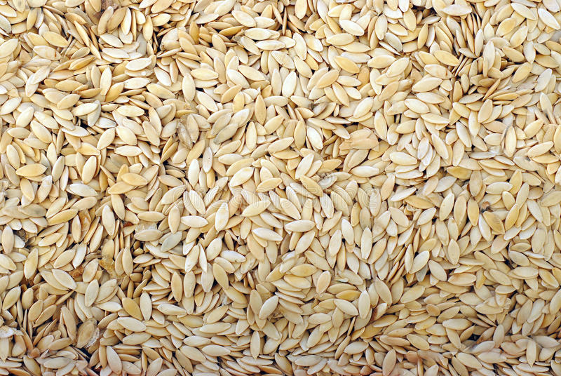 семена огурца стоковое фото
