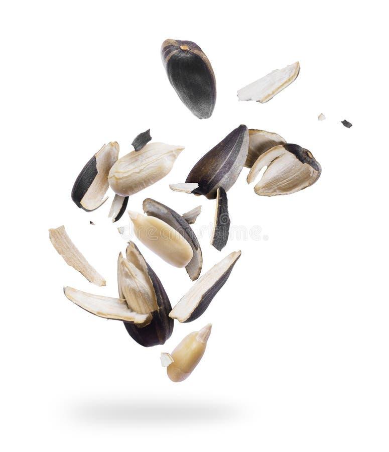 Семена подсолнуха задавленные в конец-вверх частей изолированный на белизне стоковая фотография rf
