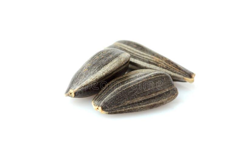 3 семена подсолнуха закрывают - вверх стоковая фотография rf