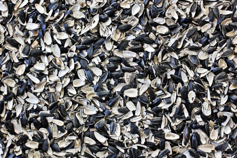 Семена подсолнуха шелухи еда вареников предпосылки много мясо очень стоковая фотография