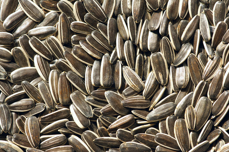 Семена подсолнуха стоковое изображение