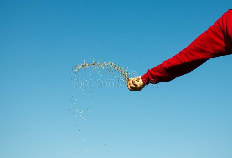 Семена руки бросая стоковая фотография rf