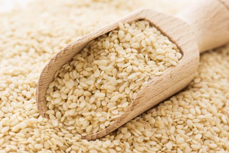 Семена сезама стоковое изображение rf