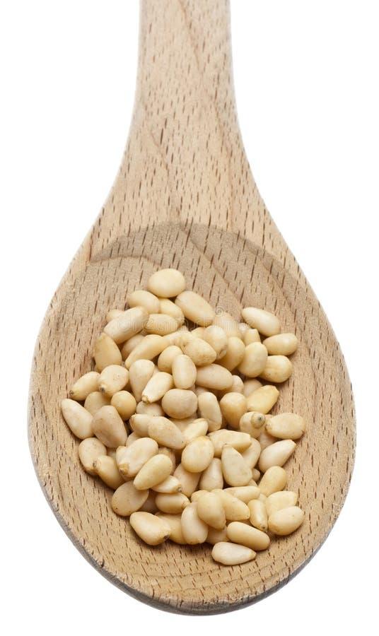 семена сосенки гайки черпают деревянное ложкой стоковые изображения rf