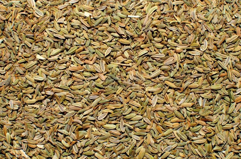 Семена фенхеля стоковая фотография rf