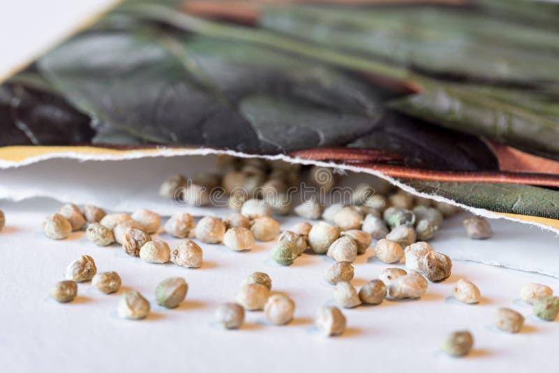 Семена шпината разлили разливать от пакета семени стоковые фотографии rf