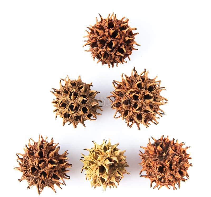 Семена стоковые изображения