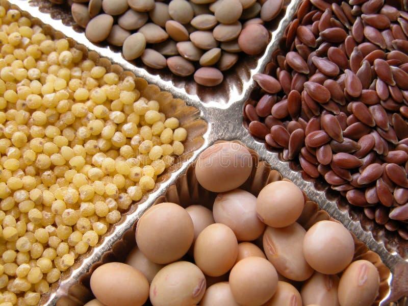 семена стоковая фотография