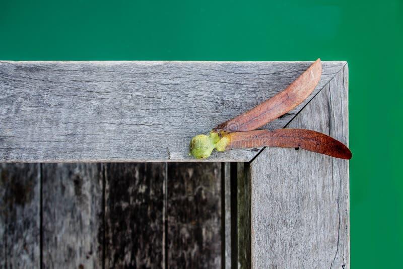 Семена alatus Dipterocarpus на деревянной предпосылке стоковое фото