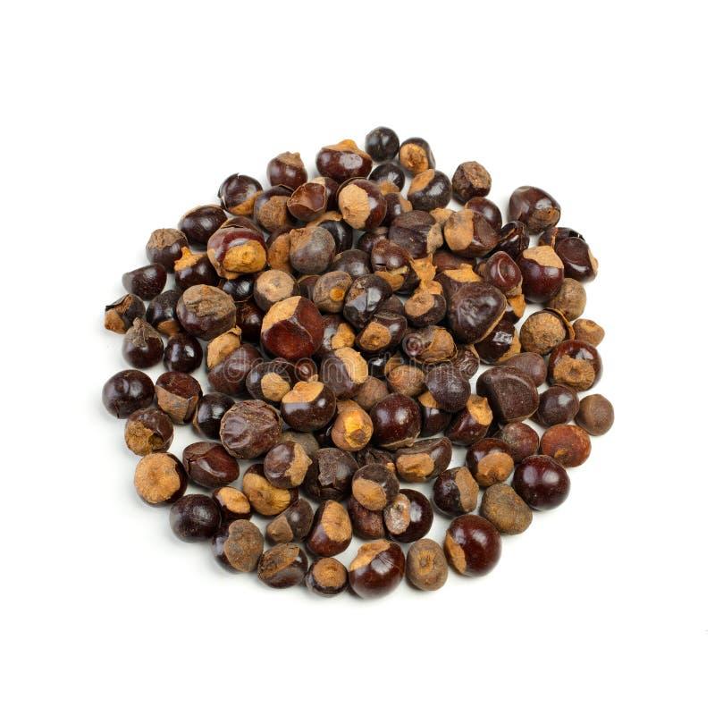 Семена Guarana стоковые изображения