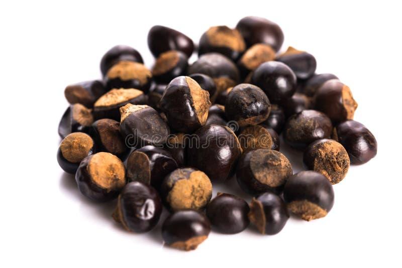 Семена Guarana стоковые изображения rf