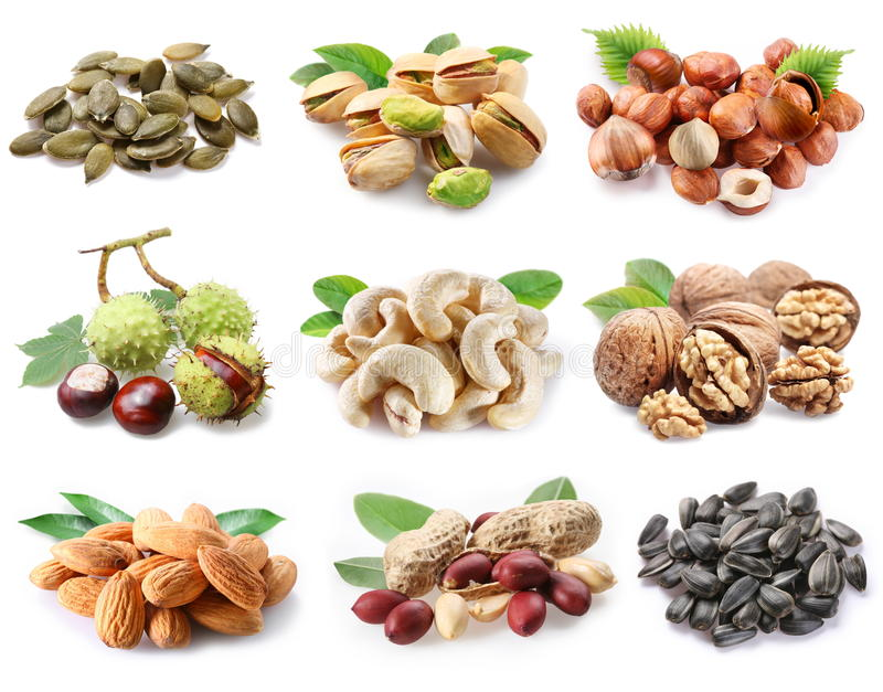 семена nuts ollection зрелые стоковые фото