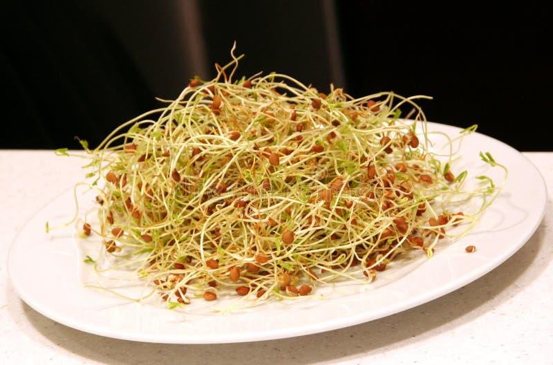 семенозачатки еды стоковая фотография rf