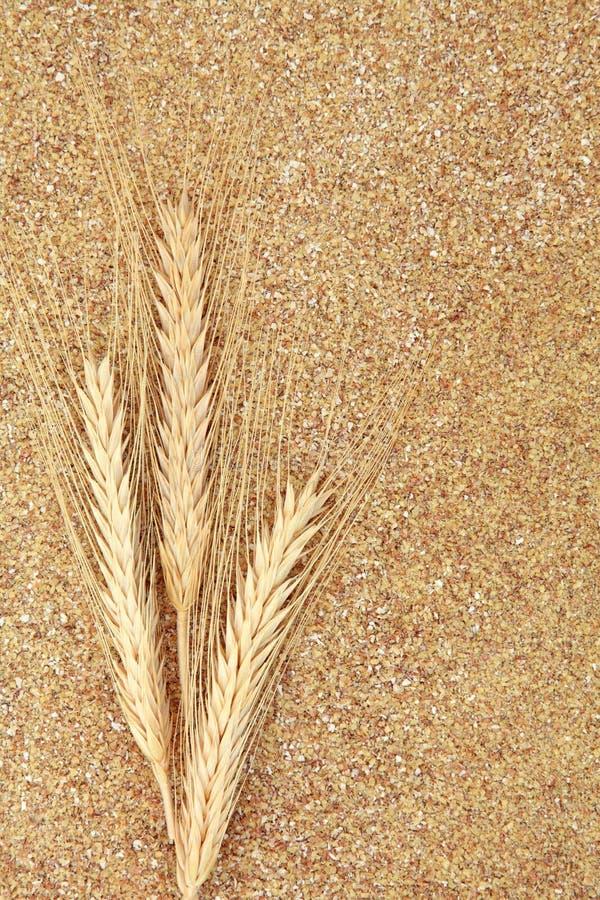 Семенозачаток пшеницы стоковые фотографии rf