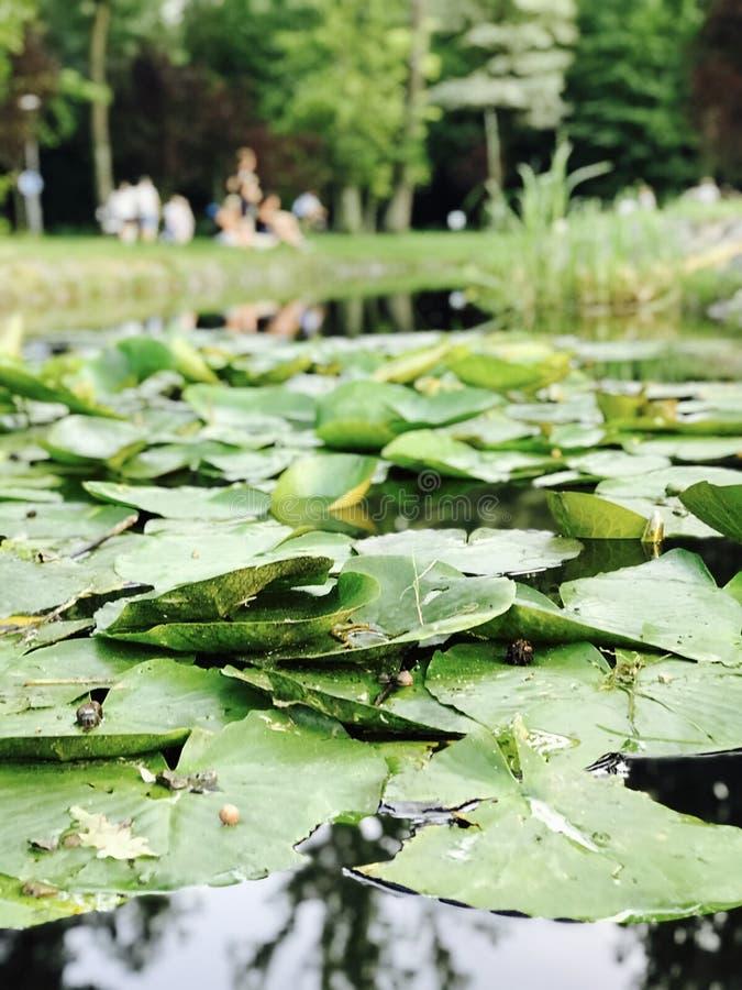 Семьи наслаждаются славным днем на парке в Bucha - ВЛЮБЛЕННОСТЬЮ - BUCHA - УКРАИНА стоковые фотографии rf