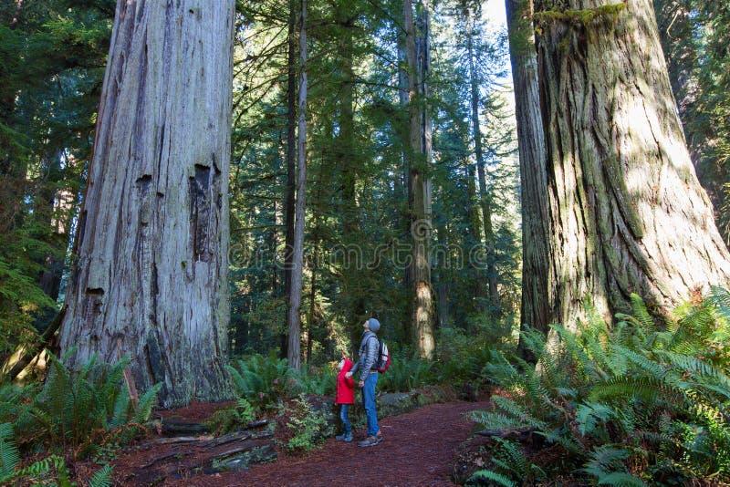 Семья в лесе redwood стоковые изображения rf