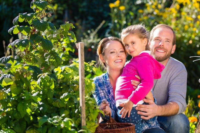Download Семья в саде стоковое изображение. изображение насчитывающей напольно - 41663209
