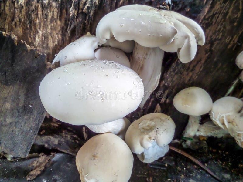 Семья гриба стоковые фотографии rf