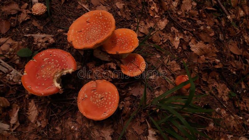 Семья грибков стоковые изображения