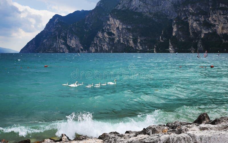 Семья лебедя на озере garda стоковые фото